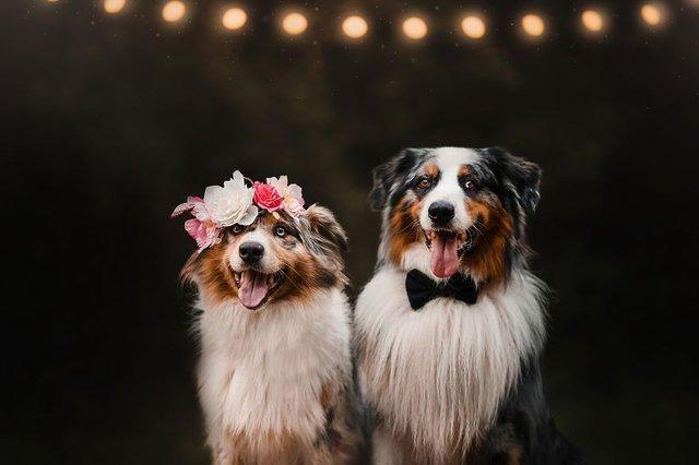 Собаки та подорожі: затишні фото, які змушують усміхнутись - фото 292854