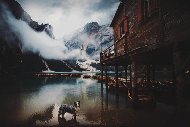 Собаки та подорожі: затишні фото, які змушують усміхнутись - фото 292855
