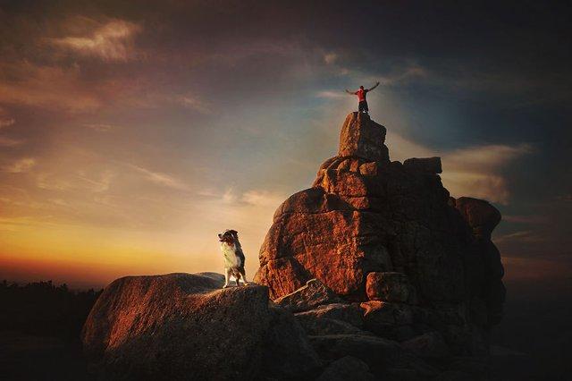 Собаки та подорожі: затишні фото, які змушують усміхнутись - фото 292856