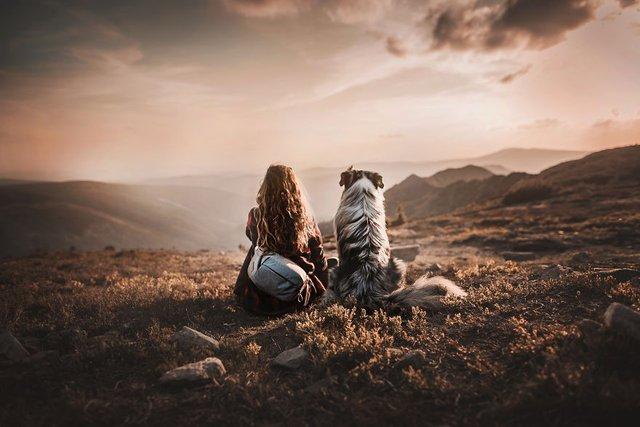 Собаки та подорожі: затишні фото, які змушують усміхнутись - фото 292857
