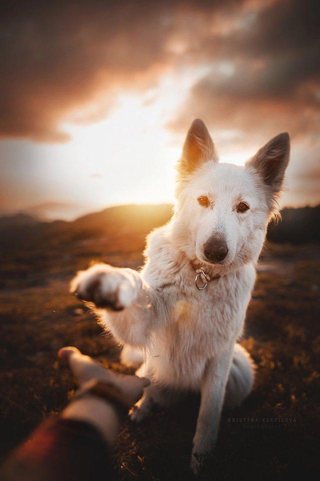Собаки та подорожі: затишні фото, які змушують усміхнутись - фото 292858