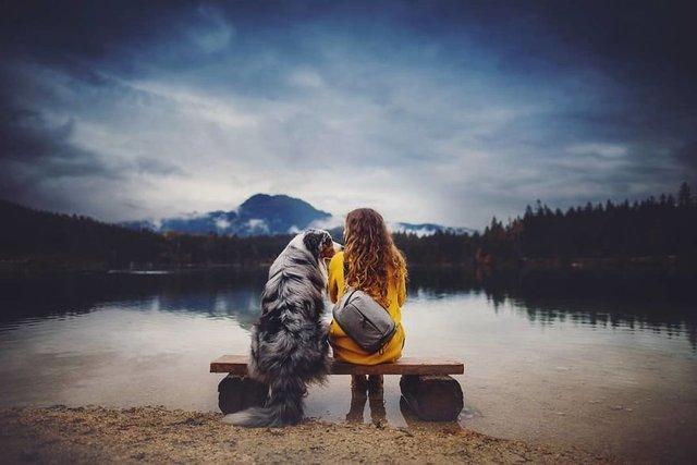 Собаки та подорожі: затишні фото, які змушують усміхнутись - фото 292859