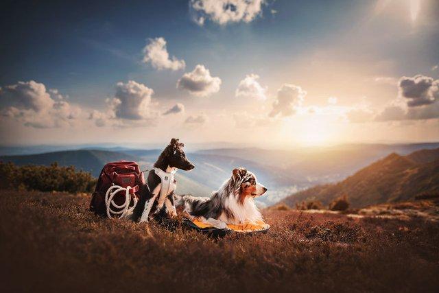 Собаки та подорожі: затишні фото, які змушують усміхнутись - фото 292860