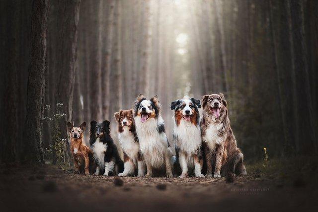 Собаки та подорожі: затишні фото, які змушують усміхнутись - фото 292861