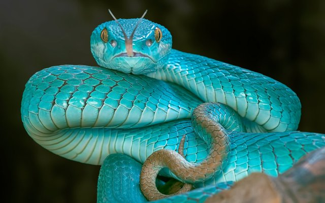 Гороскоп на 2019 рік для Змії  - фото 293140
