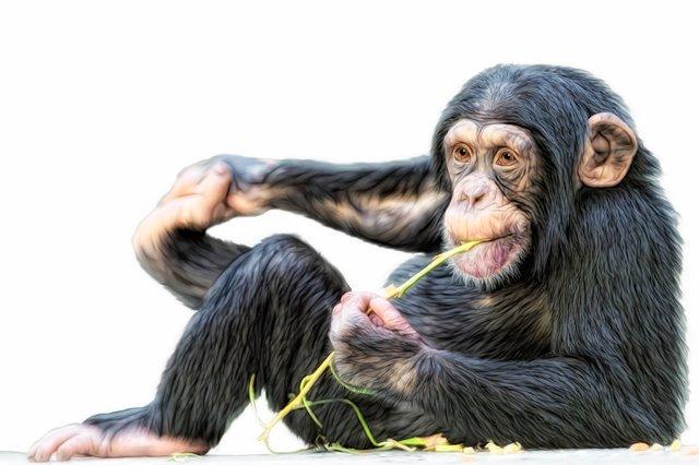 Гороскоп на 2019 рік для Мавпи  - фото 293143