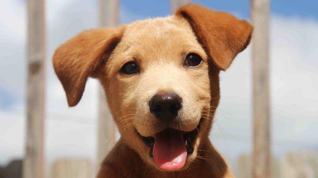 Гороскоп на 2019 рік для Собаки  - фото 293145