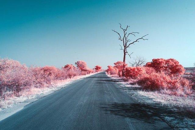 Італієць показує світ у нетипових кольорах: вражаючі фото - фото 293449