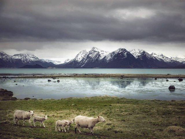 Так виглядає Норвегія за полярним колом: атмосферні знімки - фото 293955