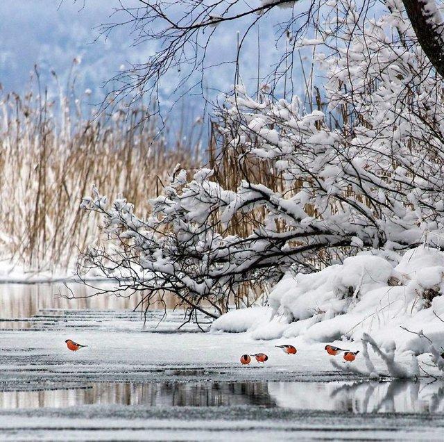 Чарівні ліси Фінляндії: казкові фото - фото 294139
