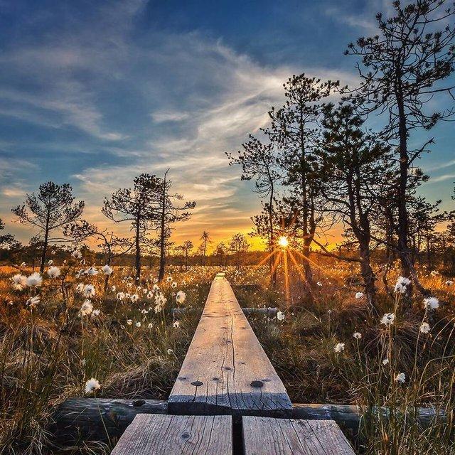Чарівні ліси Фінляндії: казкові фото - фото 294141