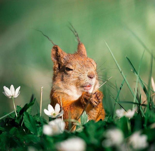 Чарівні ліси Фінляндії: казкові фото - фото 294142