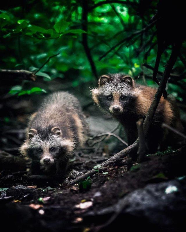 Чарівні ліси Фінляндії: казкові фото - фото 294143
