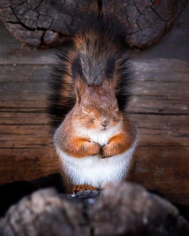 Чарівні ліси Фінляндії: казкові фото - фото 294144