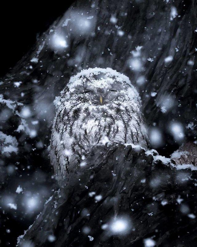 Чарівні ліси Фінляндії: казкові фото - фото 294145