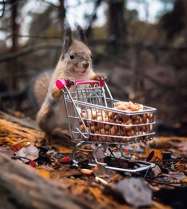 Чарівні ліси Фінляндії: казкові фото - фото 294147
