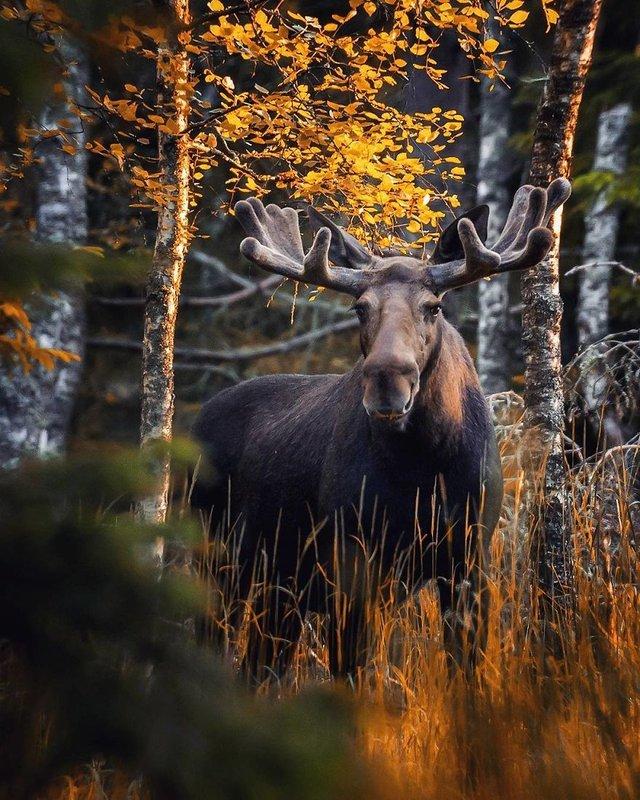 Чарівні ліси Фінляндії: казкові фото - фото 294148