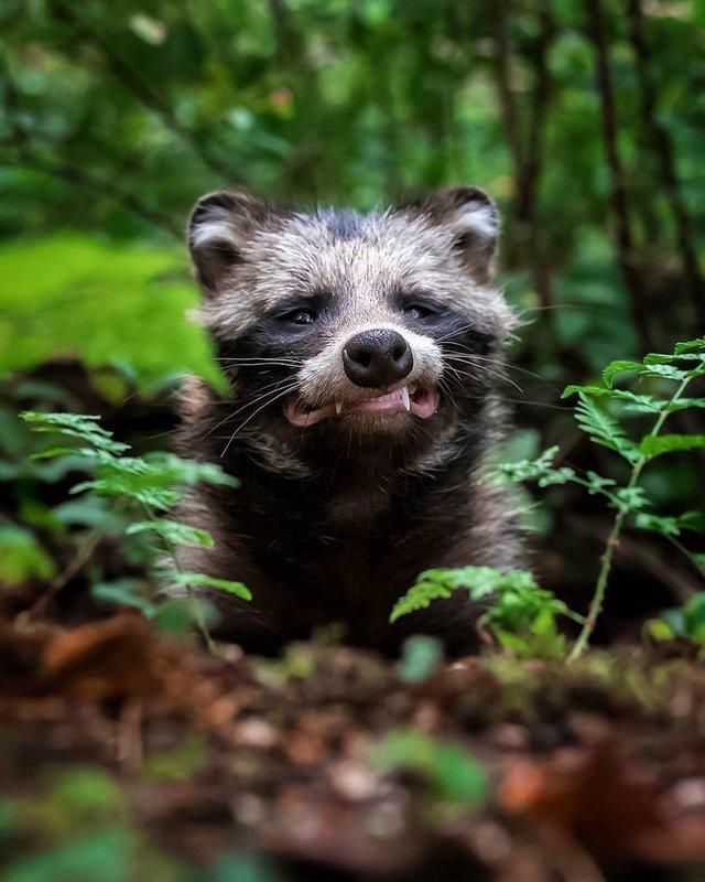 Чарівні ліси Фінляндії: казкові фото - фото 294151