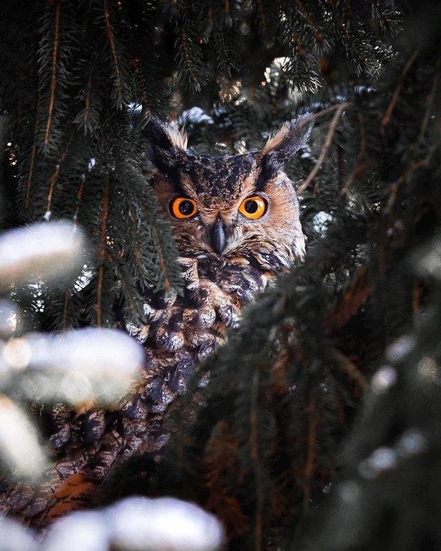 Чарівні ліси Фінляндії: казкові фото - фото 294152