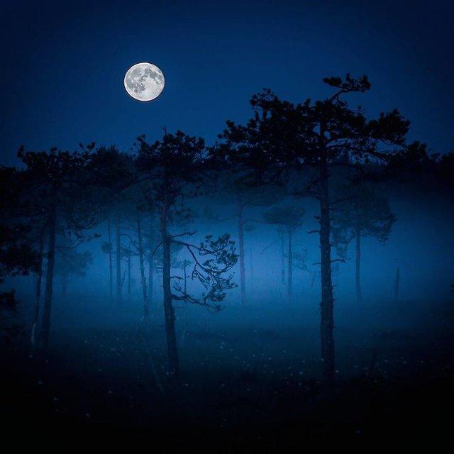 Чарівні ліси Фінляндії: казкові фото - фото 294153
