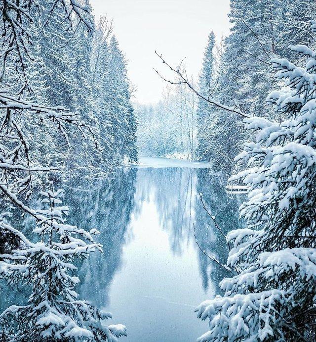 Чарівні ліси Фінляндії: казкові фото - фото 294154