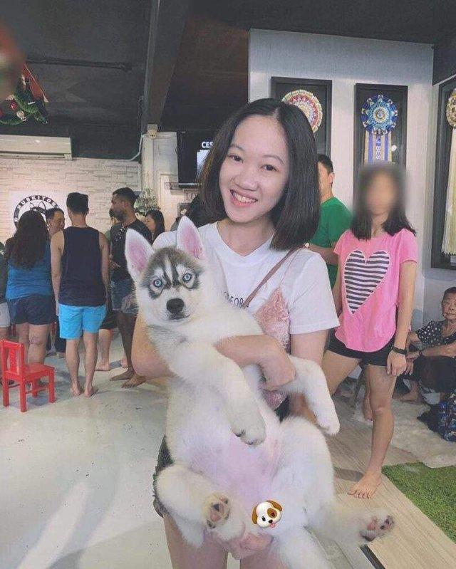У Малайзії відкрили кафе для любителів хаскі - фото 295122
