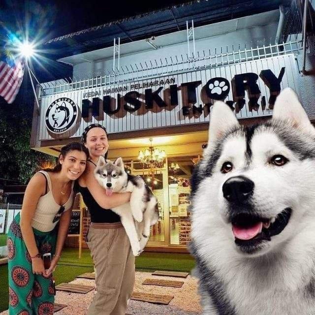 У Малайзії відкрили кафе для любителів хаскі - фото 295129
