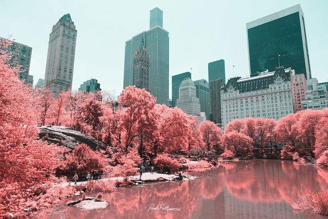 Наче в казці: італійський фотограф показує світ у незвичайних кольорах - фото 295523