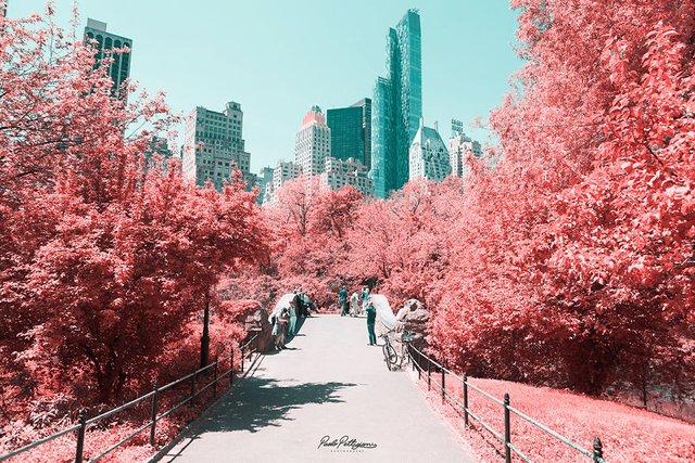 Наче в казці: італійський фотограф показує світ у незвичайних кольорах - фото 295530