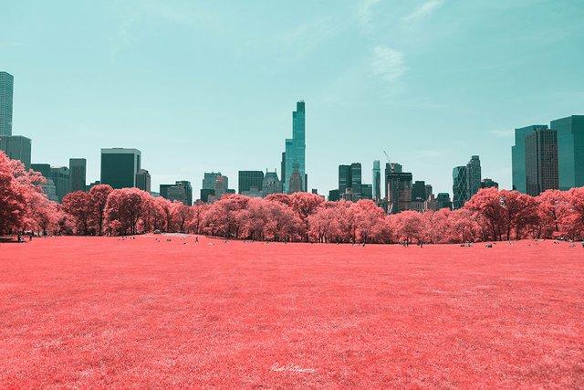 Наче в казці: італійський фотограф показує світ у незвичайних кольорах - фото 295536