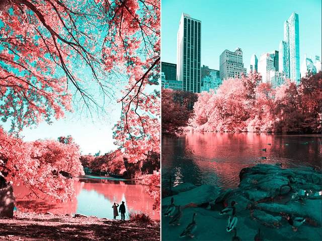 Наче в казці: італійський фотограф показує світ у незвичайних кольорах - фото 295538