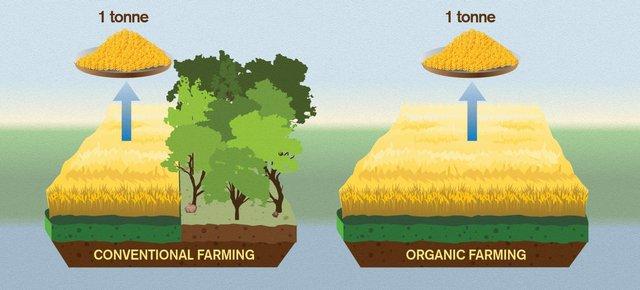 Вирощування органічних овочів і фруктів впливає на глобальне потепління - фото 295639