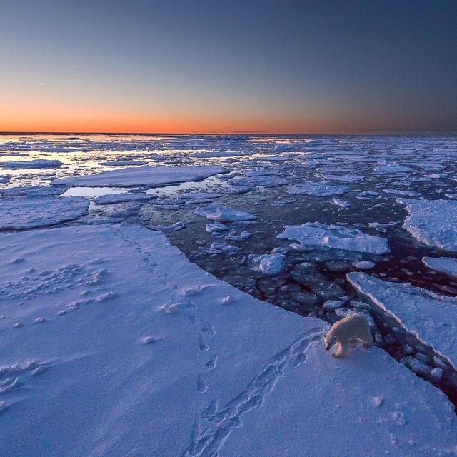 Дика природа Арктики у вражаючих фото мандрівника - фото 296090