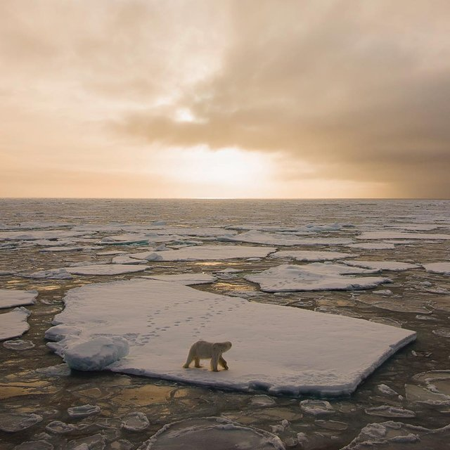 Дика природа Арктики у вражаючих фото мандрівника - фото 296095