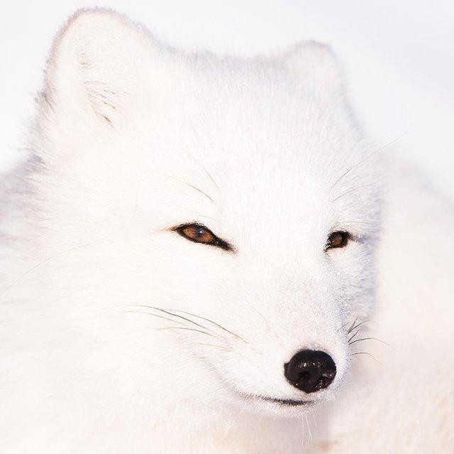 Дика природа Арктики у вражаючих фото мандрівника - фото 296100