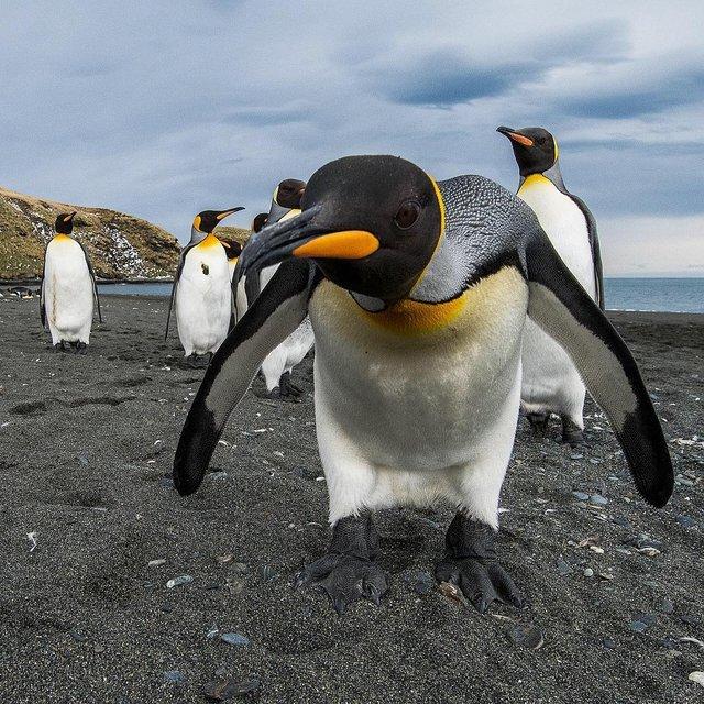 Дика природа Арктики у вражаючих фото мандрівника - фото 296105