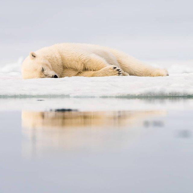 Дика природа Арктики у вражаючих фото мандрівника - фото 296106