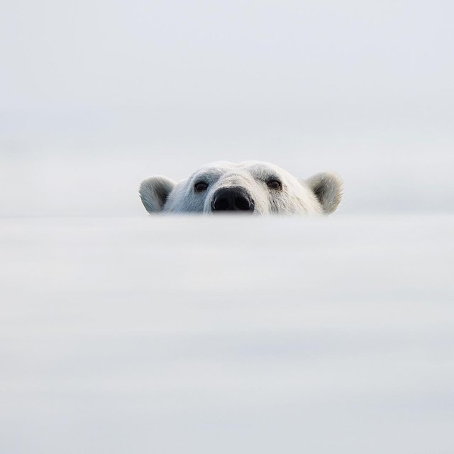 Дика природа Арктики у вражаючих фото мандрівника - фото 296107