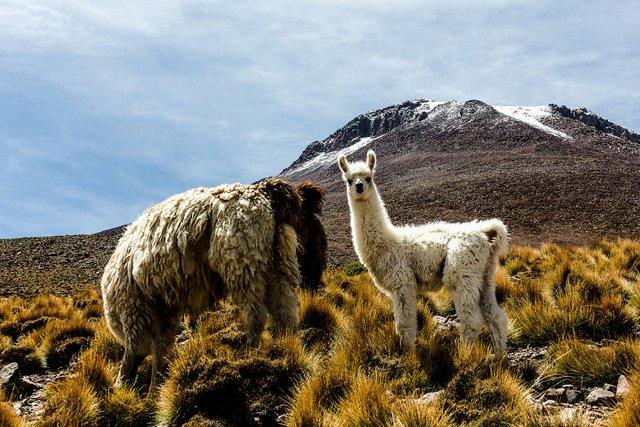 Дика краса Південної Америки: вражаючі фото - фото 297341