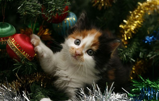 Новорічна прикмета про котиків  - фото 298260