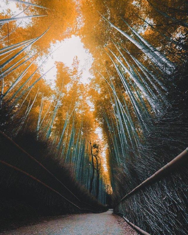 Захопливі вуличні фото Японії Такеші Хаякави, які заворожують - фото 298521