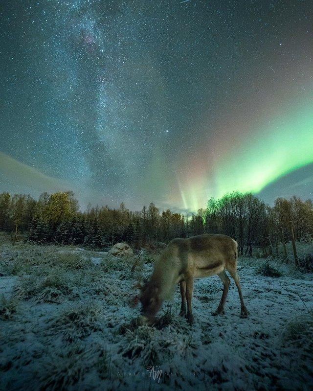Неймовірна краса полярного сяйва: захопливі фото і відео - фото 299229