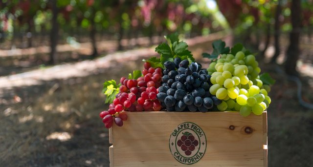 Виноградні кісточки виявилися корисними - фото 299706