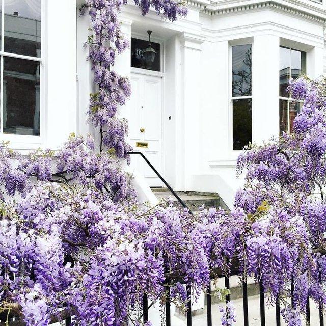 Фотограф показала найкрасивіші двері Лондона - фото 300054
