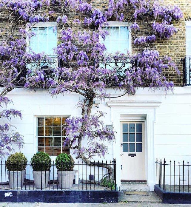 Фотограф показала найкрасивіші двері Лондона - фото 300064