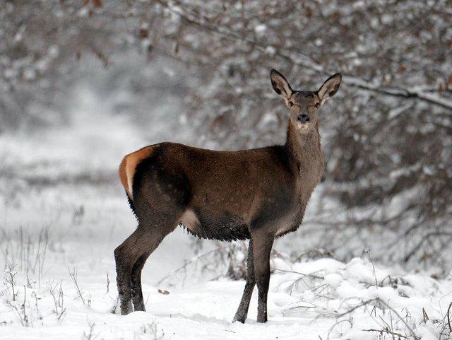 У мережі показали, як дикі тварини зимують у Чорнобилі - фото 300157