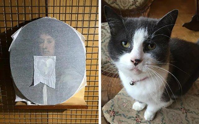 Як кіт зіпсував витвір мистецтва: фотофакт - фото 300294