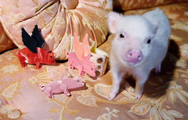 Маленькі свинки стали героями кампейну Gucci - фото 300333