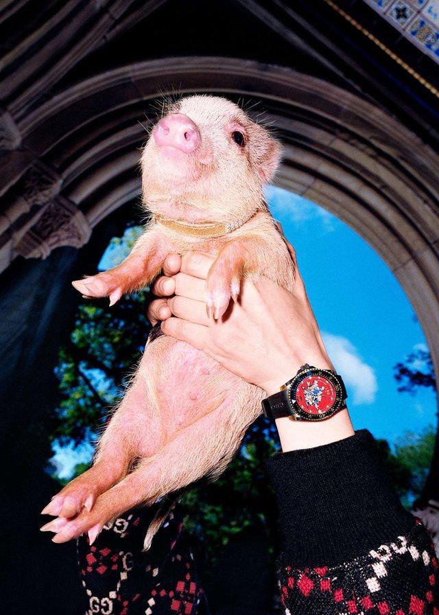 Маленькі свинки стали героями кампейну Gucci - фото 300334