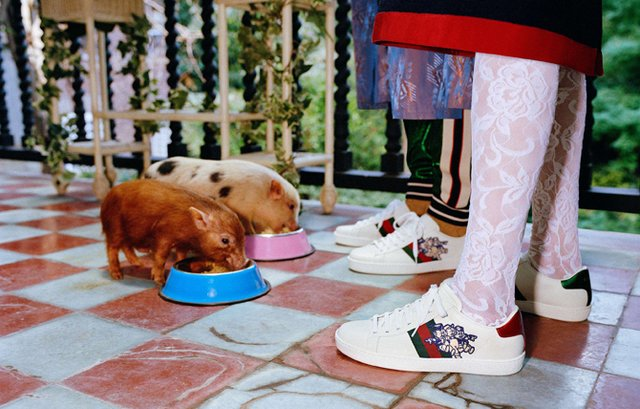 Маленькі свинки стали героями кампейну Gucci - фото 300337